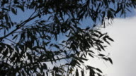 Tree silhouetted against sky video