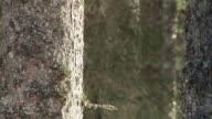 HD: Tree stem video
