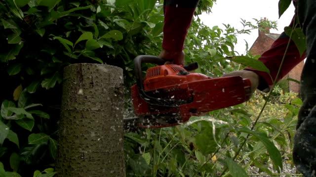 Tree Surgeon At Work video