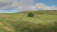 Tree Surrounded by Pennine Fields video