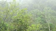 Tree top video