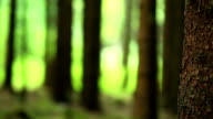 Tree Trunk In Coniferous Forest Close-up PAN video