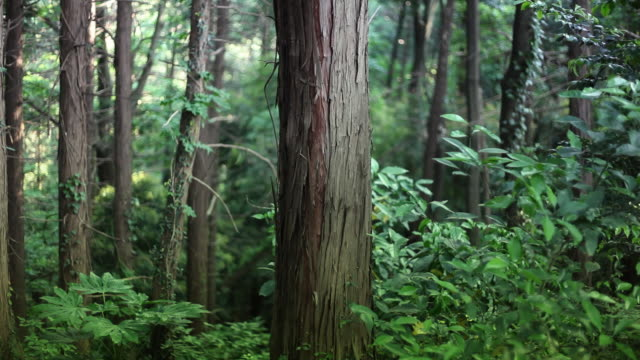 Tree trunk in deep forest video