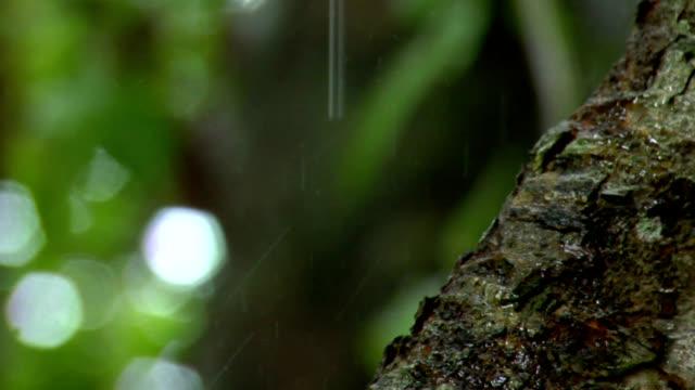 Tree trunk in Rain video