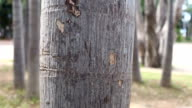 Tree trunk of tropical tree in the public park. video