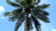 Tree video