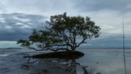 Tree with Spring Tides Time-lapse video