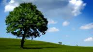 tree-field-sky video