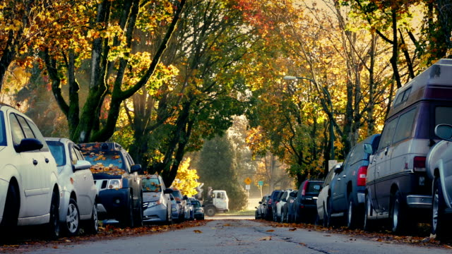 Tree-Lined Road With Passing Truck In Fall video