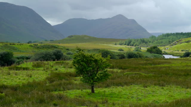 Trees and plants in the green field in Carrowmore Ireland video