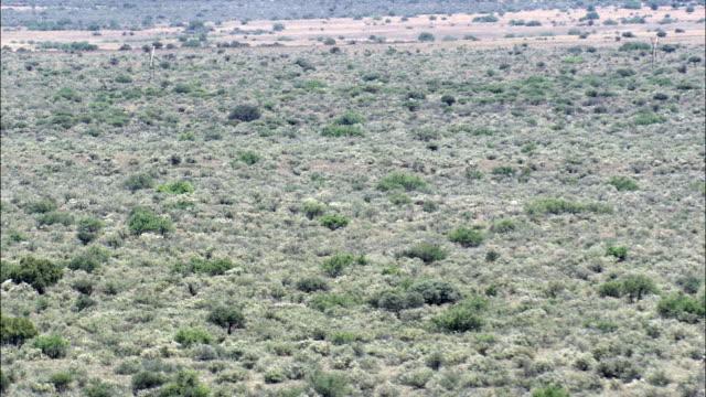 Trees And Scrub  - Aerial View - Northern Cape,  Pixley ka Seme District Municipality,  Siyancuma,  South Africa video