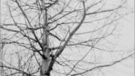 trees and snow in super-8 video