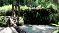 Trees and water in Erawan National Park, western Thailand video