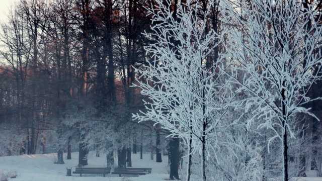 Trees covered with snow. Panorama of winter park.  Benches on river bank video