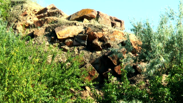 Trees growing in the rocks video