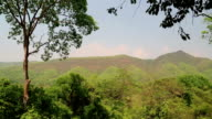 Trees in Erawan National Park in Thailand video