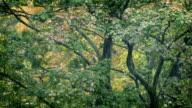 Trees In Heavy Rainfall video