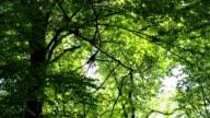 Trees in springtime video