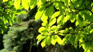 Trees in Summer video
