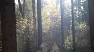 Trees in sunlight video