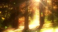 Trees losing leaves in autumn loop video