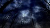 Trees of terror. video