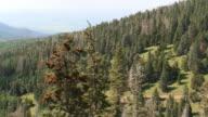Trees on Mountain Slope - Pan video