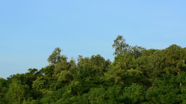 Trees on sky video
