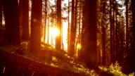 Trees Sunset video