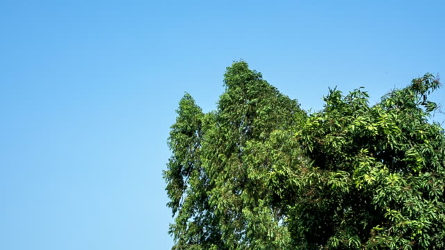 trees swaying in wind video