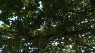 HD CRANE: Treetop video