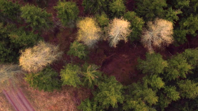 AERIAL: Treetops in a forest video