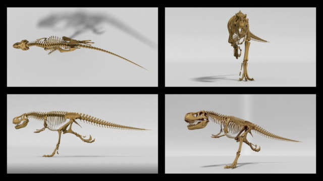 Trex skeleton running cycle, 3D animation loop, alpha channel video