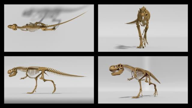 Trex skeleton walking cycle, 3D animation loop, alpha channel video