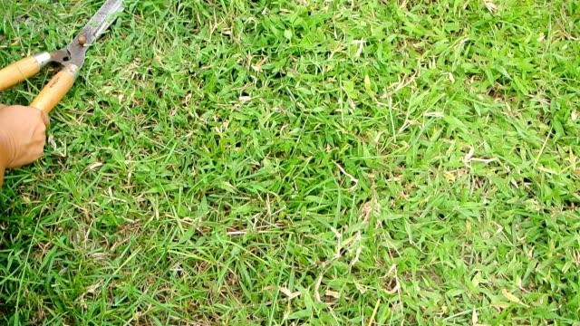 Trimming a grass video