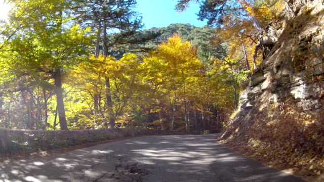 trip into the mountains through autumn forest, GoPro video