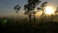 Tropical Australian Landscape at Sunrise video