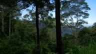 Tropical Australian Landscape video