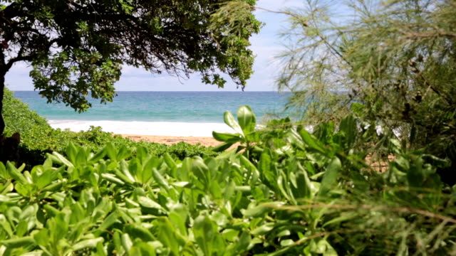 Tropical Beach Landscape, Hawaii video