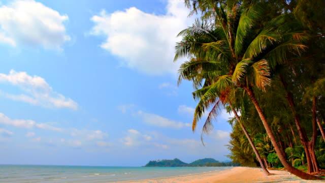 Tropical beach, palm tree and blue sky video