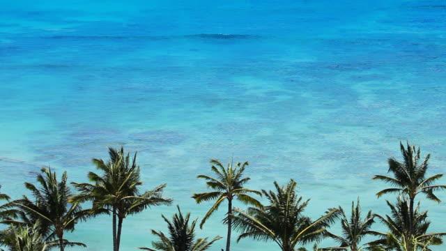 Tropical Beach Paradise video