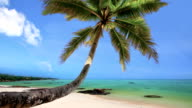 Tropical Beach Paradise with Palm Trees video