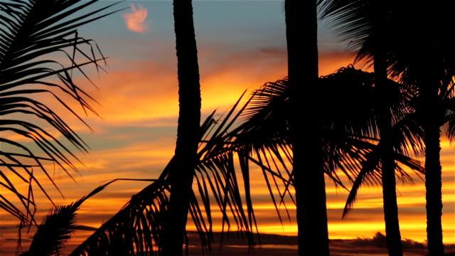Tropical Beach Sunset in Maui, Hawaii video