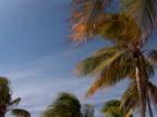 PAL: Tropical beach video