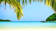 Tropical beach. video