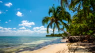 Tropical Beach with Coconut Palm in Cuba video