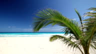 Tropical beach with coconut palm tree and white sand on coastline video