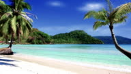 Tropical beach with coconut palms trees video
