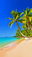 Tropical beach with palm tree. video