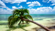 Tropical Beach with Palm Tree video